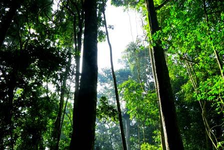 Mabira Forest - Jinja town